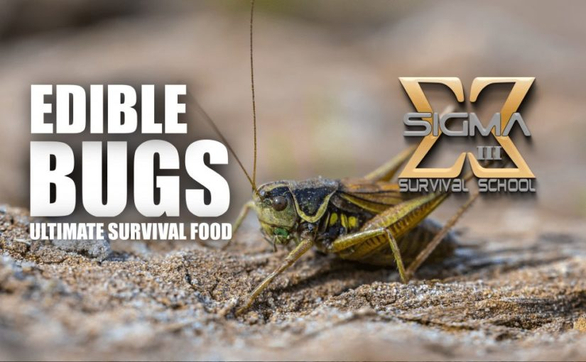 Edible Bugs – Ultimate Survival Food