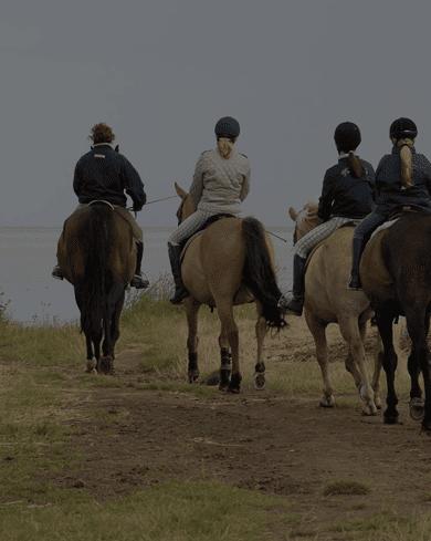 Horseback Survival – Romania